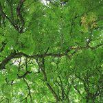 1-Bäume
